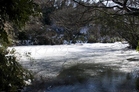 谷戸の池-2.jpg